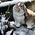 雪うさんぽ①